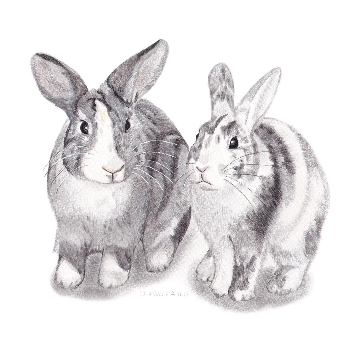 Rabbits Illustration